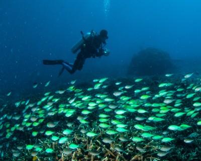 Plongeur sous l'eau qui prends dans photos d'un banc de poissons.
